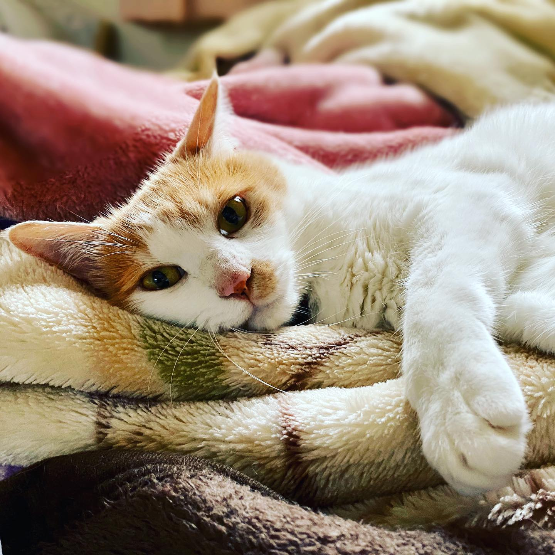 世界猫の日。 (iPhone 11 Pro Max)