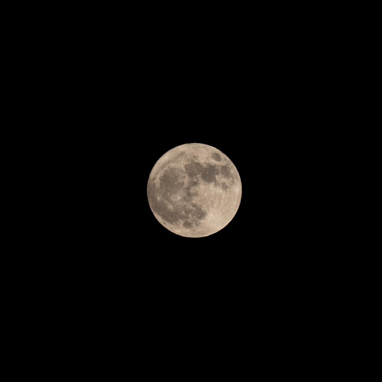11月31日。満月でハロウィンでブルームーン。 ついでに今年一番小さな満月。(OLYMPUS OM-D E-M1 MARK II + M.ZUIKO DIGITAL ED 300mm F4.0 IS PRO)