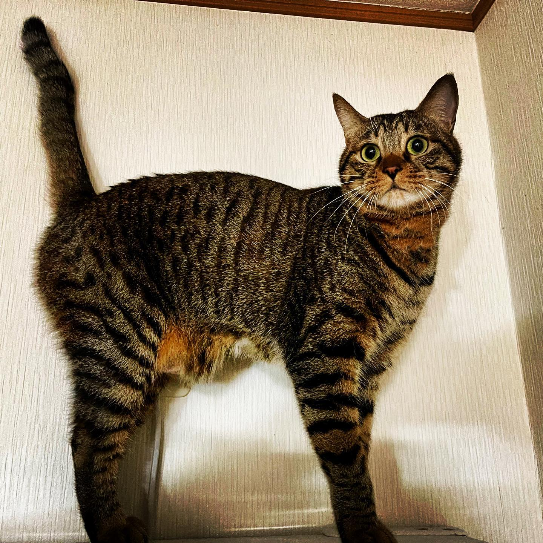 冷蔵庫の上で興奮するネコさん。(iPhone 12 Pro Max 広角)
