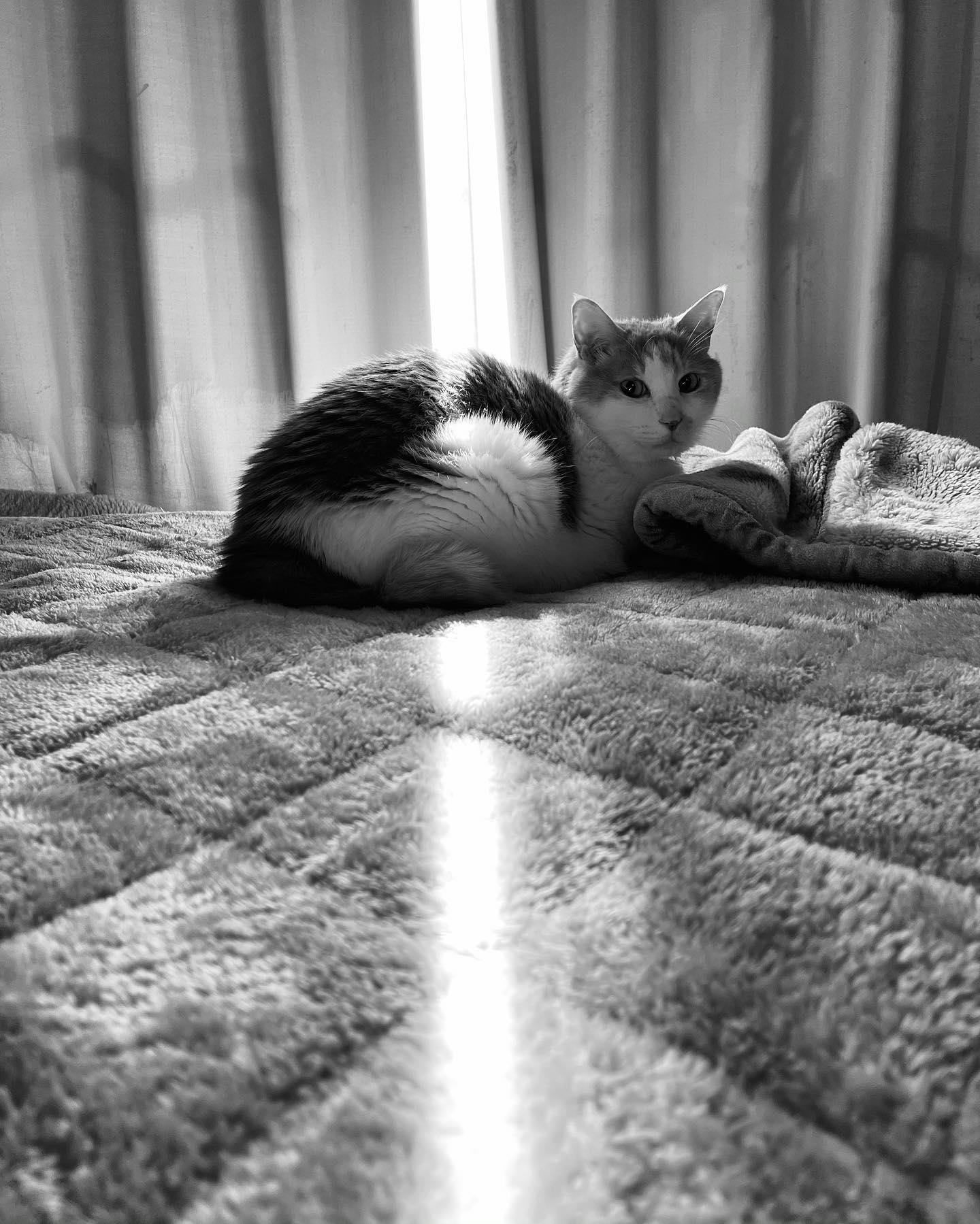 ネコさんの背に光の柱。(iPhone 12 Pro Max 広角 モノクロ)