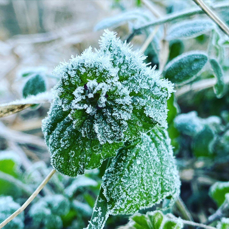 霜。(iPhone 12 Pro Max 望遠)